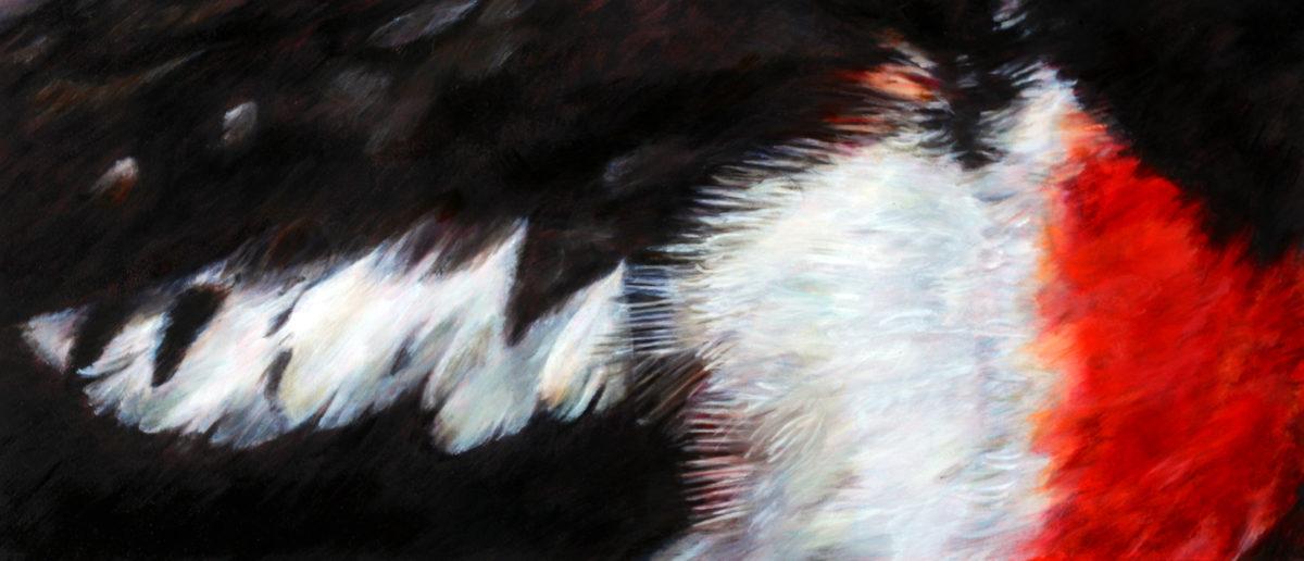 Feathers of Rose Breasted Grosbeak